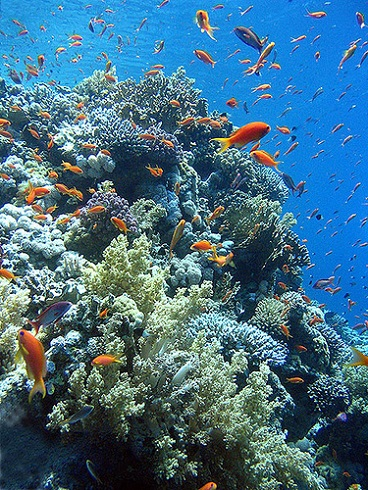 Coral Reefs - Ras Mohamed National Park