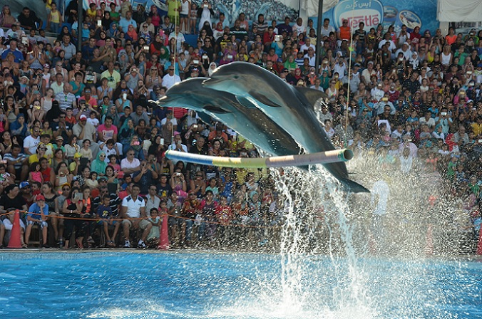 Dolphin Show Excursion - Sharm El Sheikh