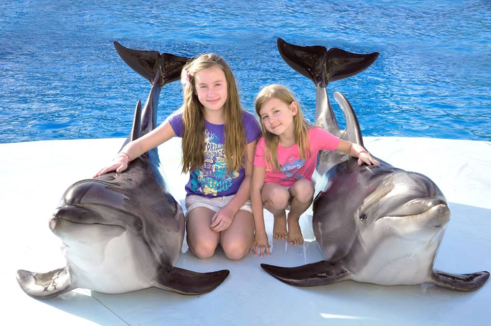 Taking photos with dolphin - Sharm El Sheikh