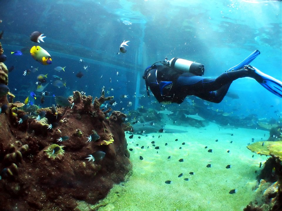 Intro Scuba Diving Sharm El Sheikh