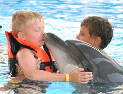 Kid swims with dolphins | Sharm El Sheikh