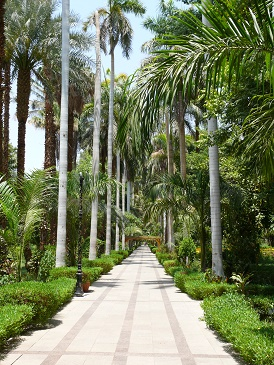 the rare Trees And Plants Of  The Botanical Garden.