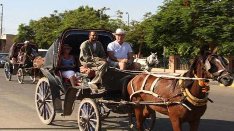 Horse Carriage in Aswan