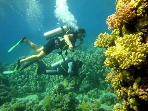 open water dive course
