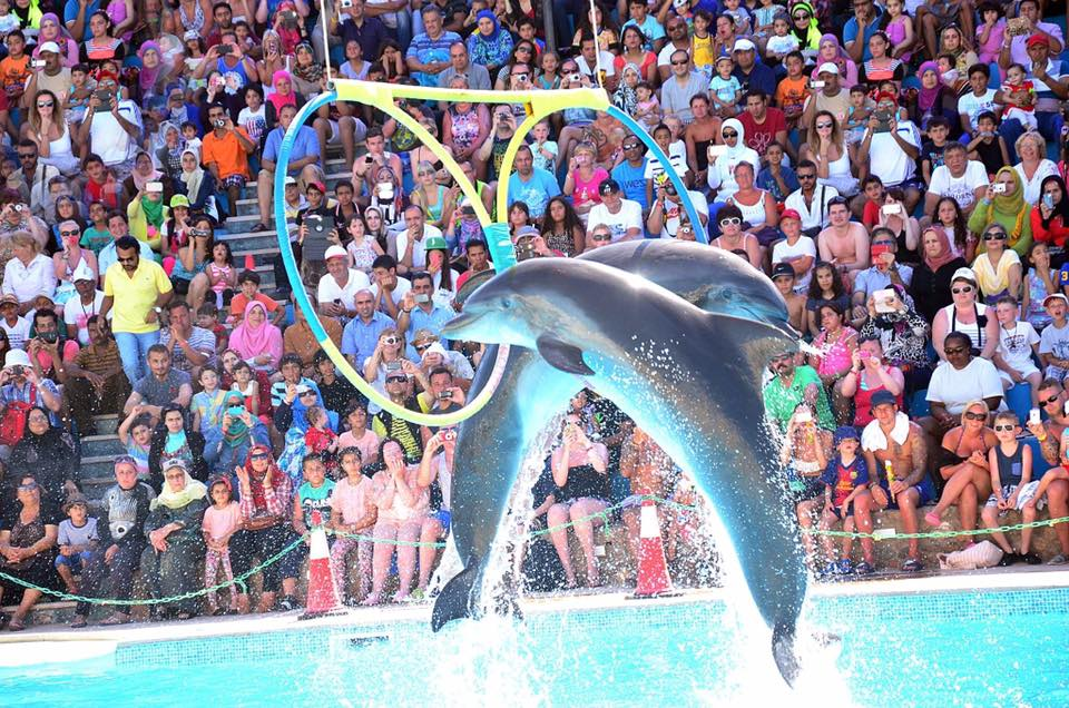 dolphin show excursion hurghada