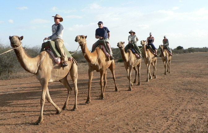 Camel Riding Tours in Sharm El Sheikh desert