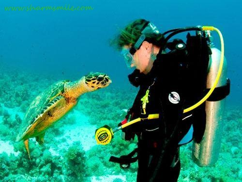 Introductory Scuba Diving in Egypt Red Sea