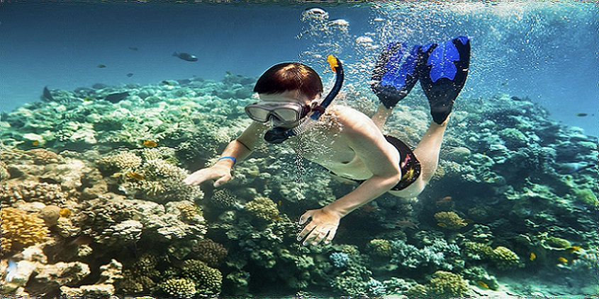 Sharm El Sheikh Short Snorkeling Tour