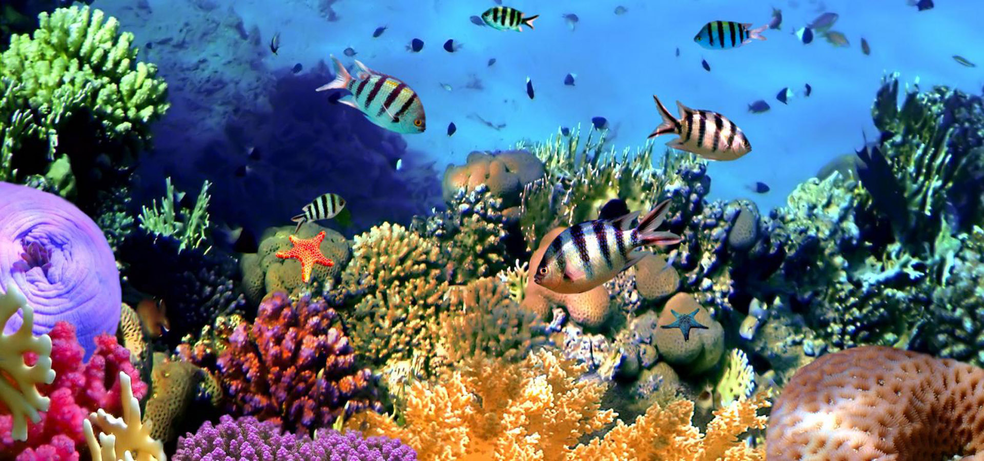 Red Sea Fish & Coral Reefs